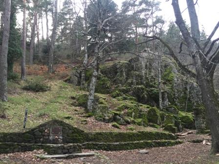 bosque peque